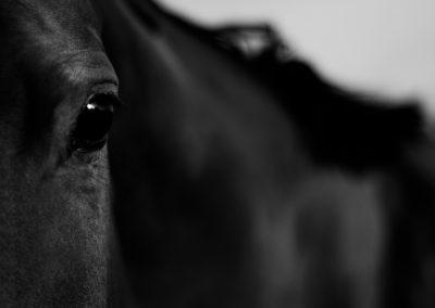 Horse 2009